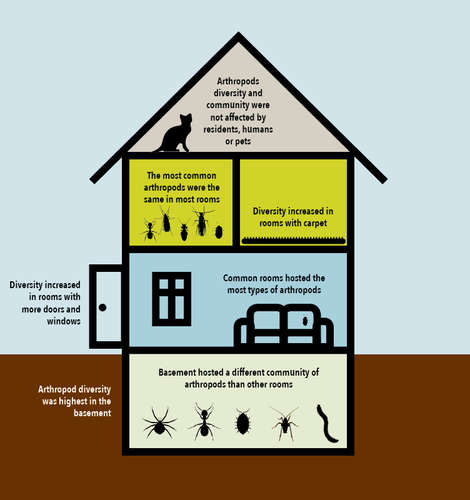 Figure: Where urban household insects prefer to live. <br>Arthropods are insects and their close relatives such as spiders and millipedes. They can have six legs (moths), eight legs (spiders), or one hundred legs (centipedes), and fly or wander from the outside environment into the indoor world.