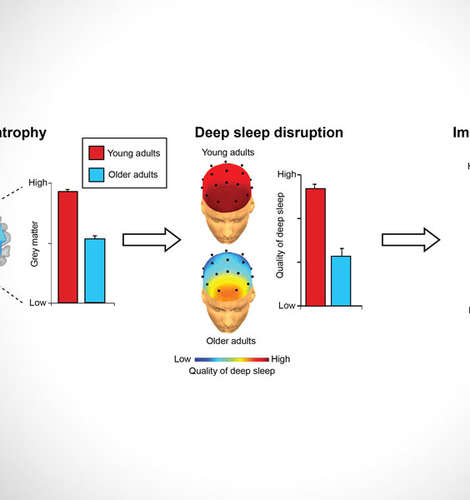 In aging, frontal brain atrophy disrupts the generation of rhythms associated with deep sleep. The magnitude of this disruption of deep sleep predicts memory impairments in older adults, suggesting that sleep may be an under-appreciated factor contributing to cognitive decline later in life. Photo credit: Mander et al.
