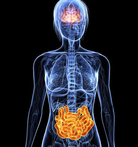 Gut microbes regulate gene expressions in brain that impact anxiety