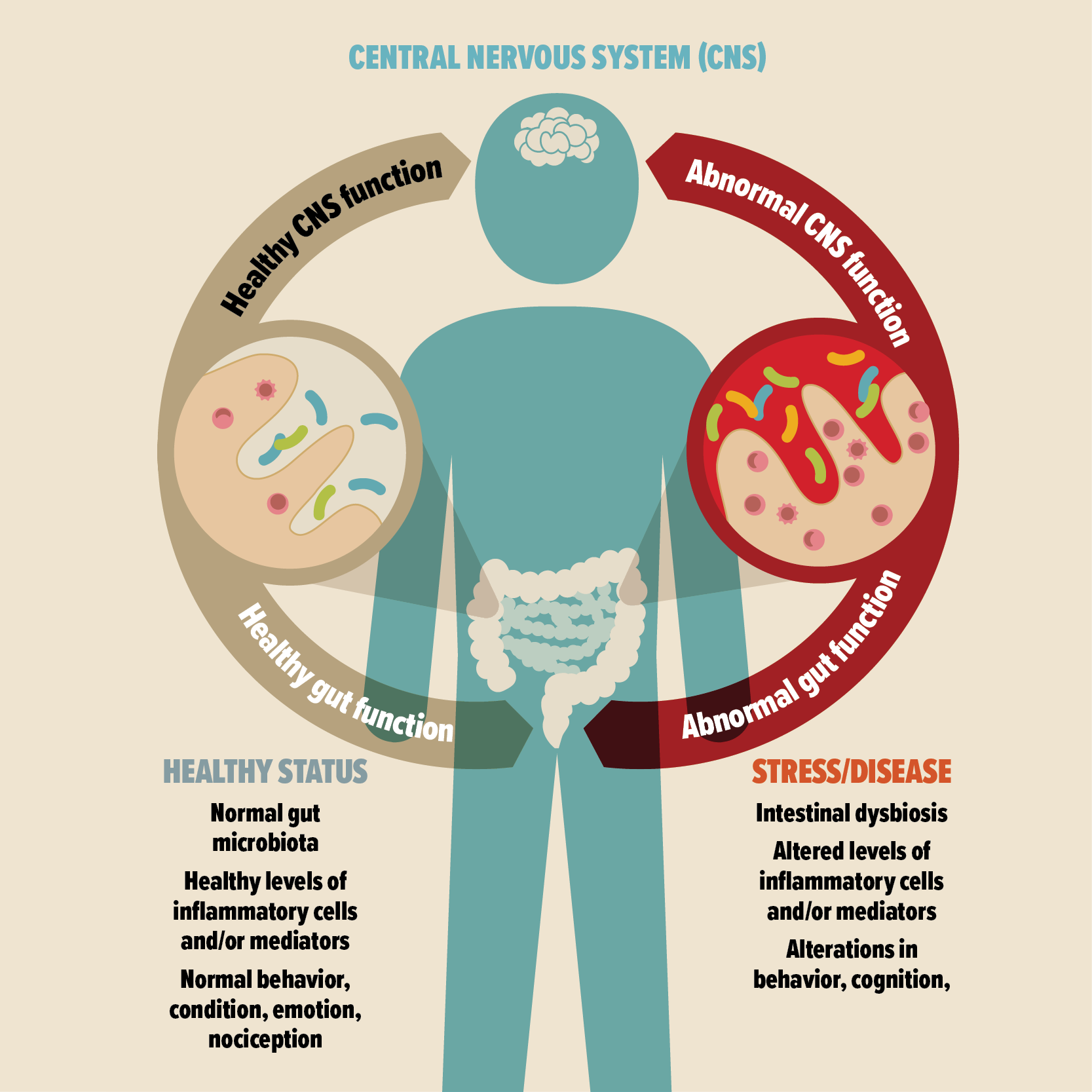 dysbiosis of the gut)